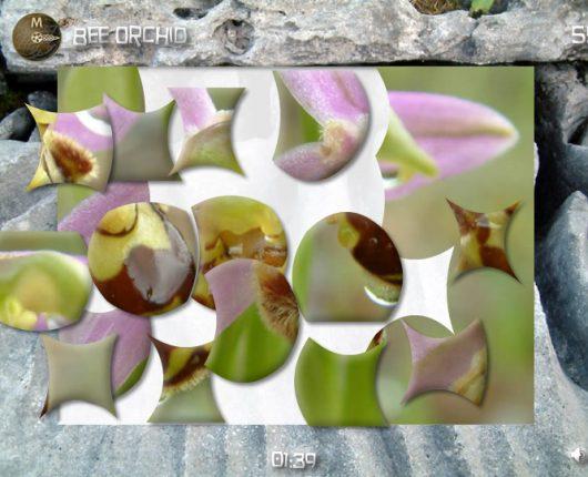 Burrenbeo Ecology Puzzle